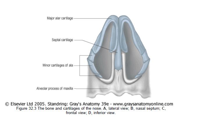 ניתוח מחיצת אף-1