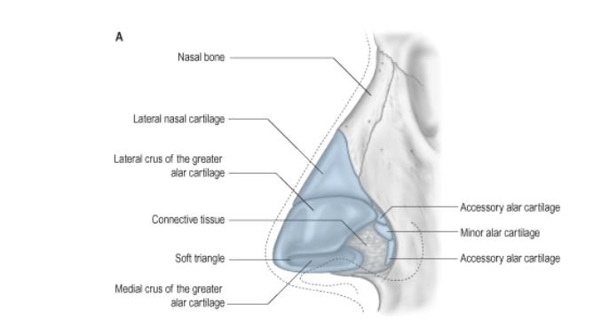 ניתוח מחיצת אף-2